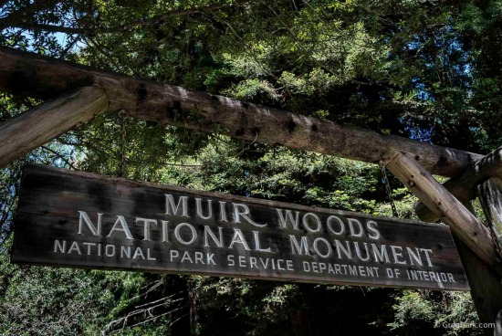 Muir Woods, National Park, California Redwood Trees