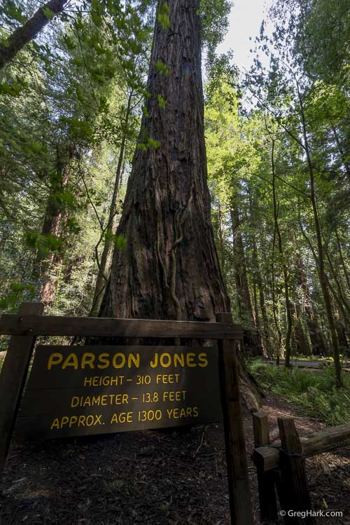 Armstrong Redwoods State Natural Reserve Parson Jones, Armstrong Red Wood Forest
